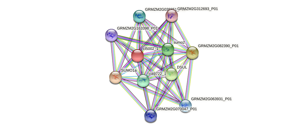 cl5002_1 protein (Zea mays) - STRING interaction network