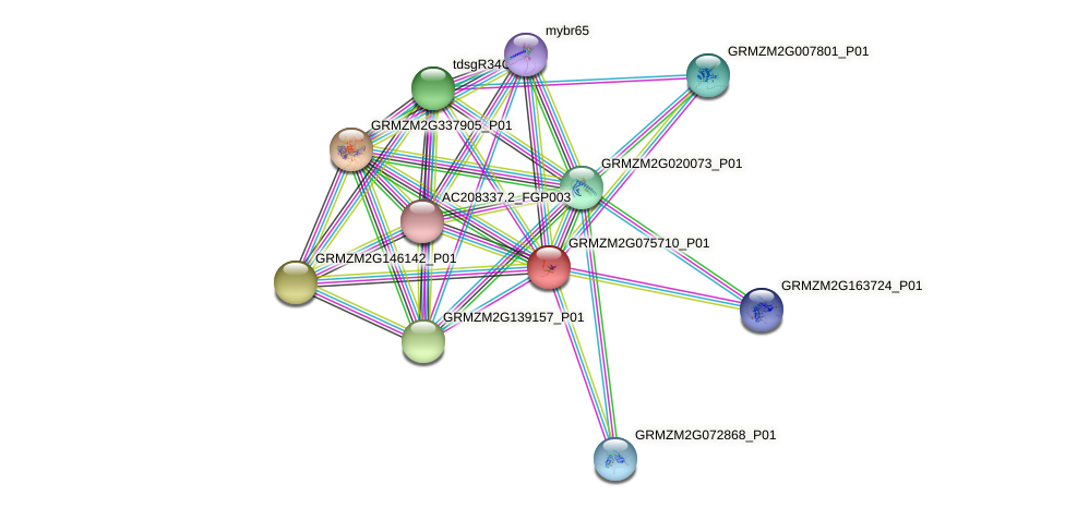 GRMZM2G075710_P01 protein (Zea mays) - STRING interaction network