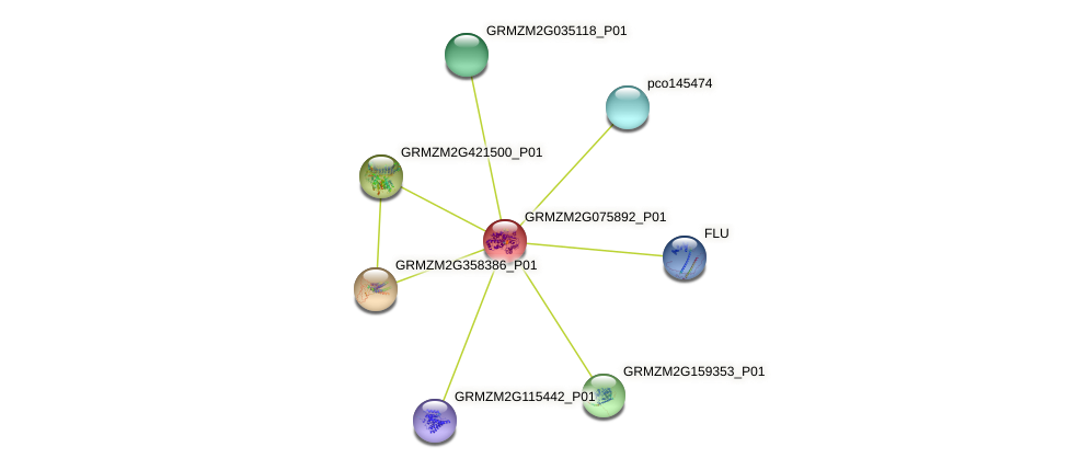 100381428 protein (Zea mays) - STRING interaction network