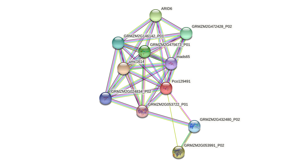 Zm.2957 protein (Zea mays) - STRING interaction network