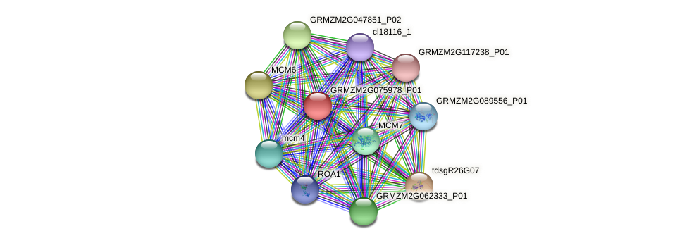 GRMZM2G075978_P01 protein (Zea mays) - STRING interaction network