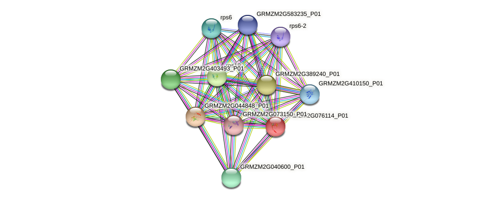 GRMZM2G076114_P01 protein (Zea mays) - STRING interaction network