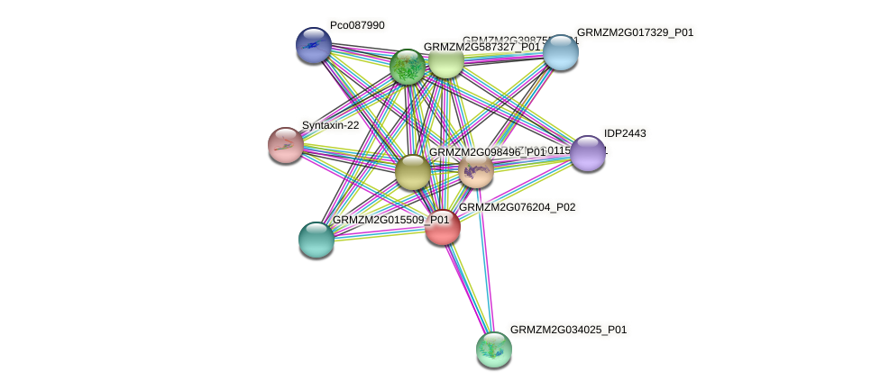 GRMZM2G076204_P02 protein (Zea mays) - STRING interaction network