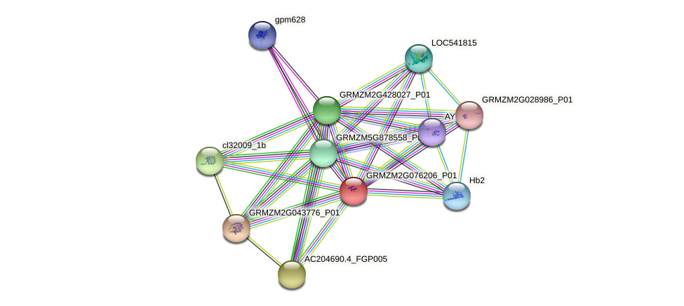 GRMZM2G076206_P01 protein (Zea mays) - STRING interaction network