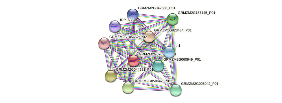 GRMZM2G076389_P01 protein (Zea mays) - STRING interaction network
