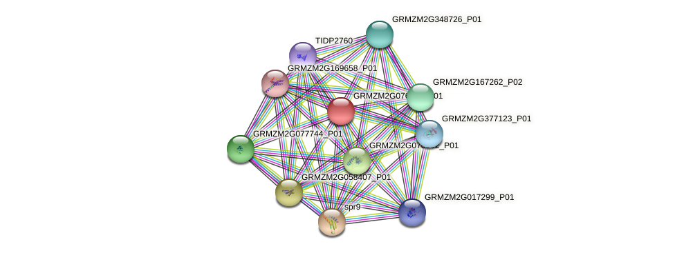 GRMZM2G076539_P01 protein (Zea mays) - STRING interaction network