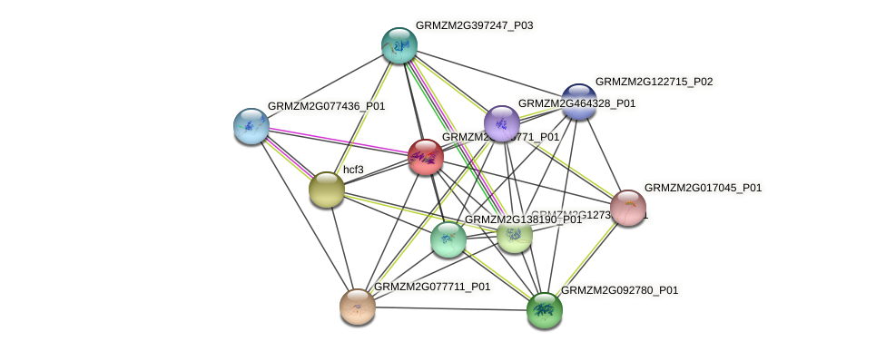 Zm.33734 protein (Zea mays) - STRING interaction network