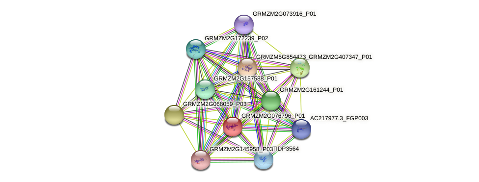 GRMZM2G076796_P01 protein (Zea mays) - STRING interaction network