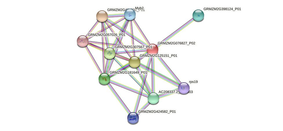 GRMZM2G076827_P02 protein (Zea mays) - STRING interaction network