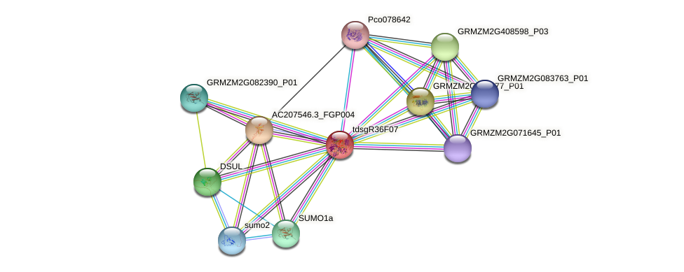GRMZM2G076858_P01 protein (Zea mays) - STRING interaction network