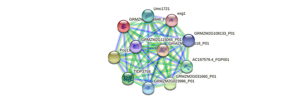 GRMZM2G076946_P02 protein (Zea mays) - STRING interaction network