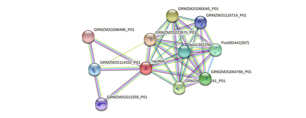 nac64 protein (Zea mays) - STRING interaction network