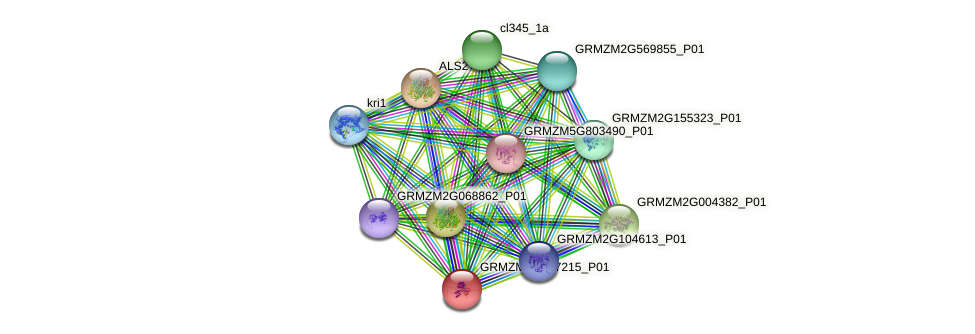 GRMZM2G077215_P01 protein (Zea mays) - STRING interaction network