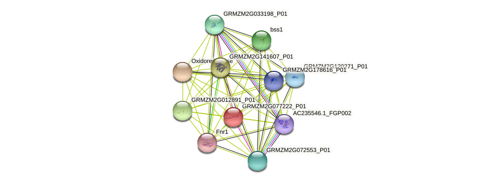 GRMZM2G077222_P01 protein (Zea mays) - STRING interaction network