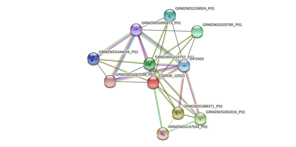 GRMZM2G077258_P03 protein (Zea mays) - STRING interaction network