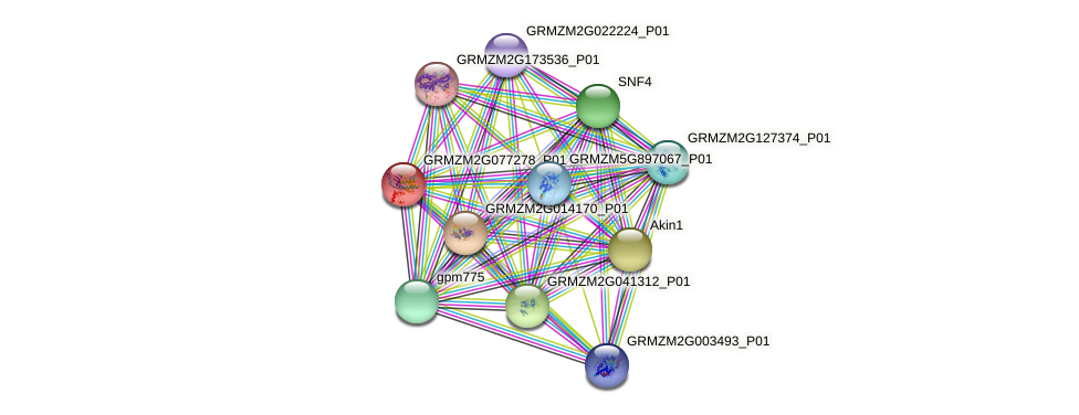 gpm299b protein (Zea mays) - STRING interaction network