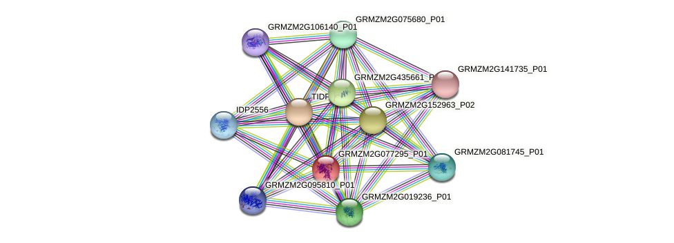 GRMZM2G077295_P01 protein (Zea mays) - STRING interaction network