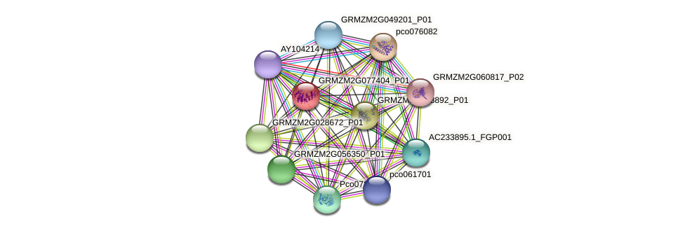 GRMZM2G077404_P01 protein (Zea mays) - STRING interaction network