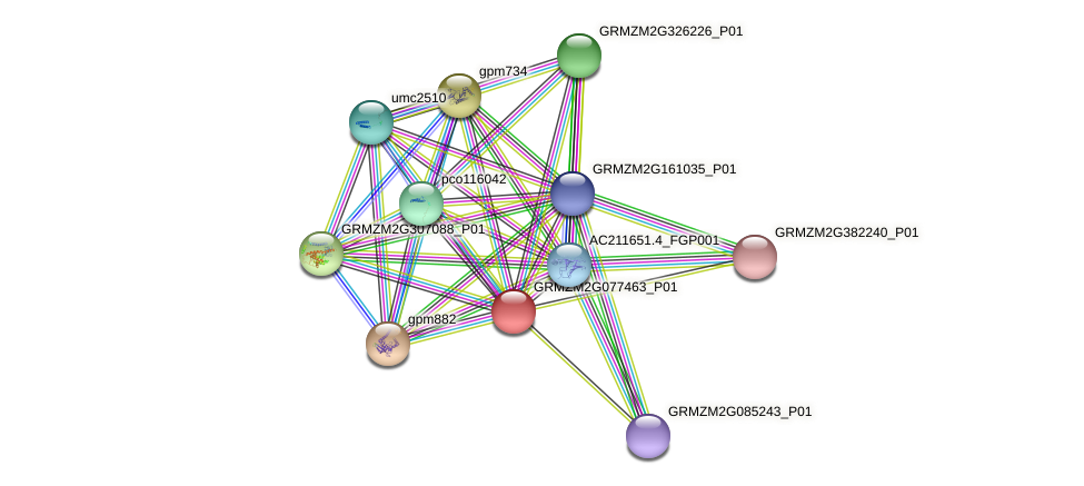 GRMZM2G077463_P01 protein (Zea mays) - STRING interaction network