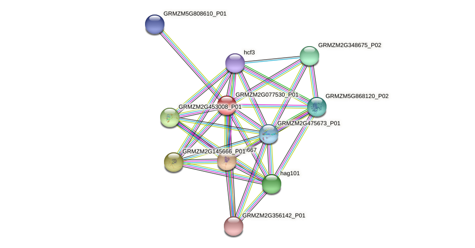 GRMZM2G077530_P01 protein (Zea mays) - STRING interaction network