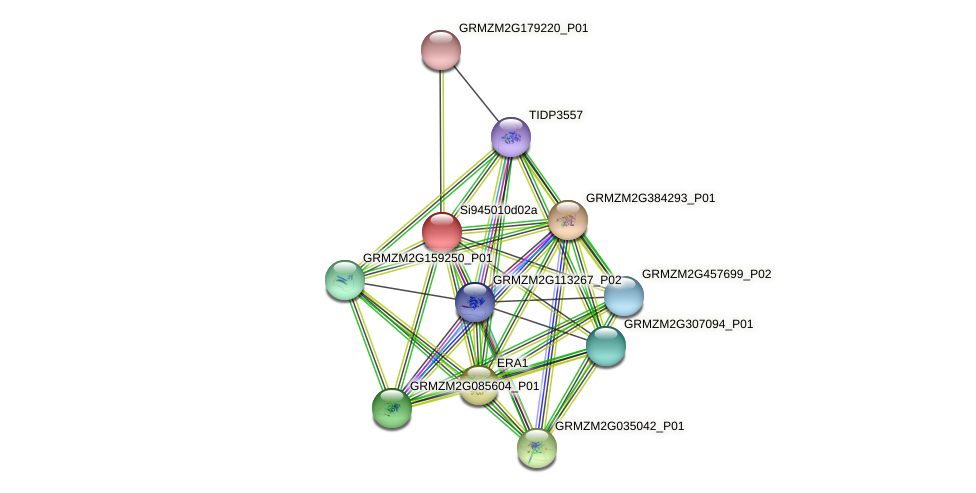 GRMZM2G077632_P01 protein (Zea mays) - STRING interaction network