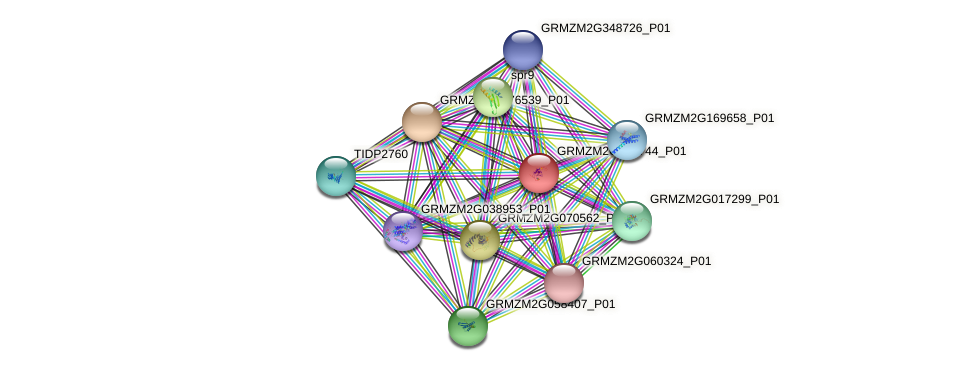 GRMZM2G077744_P01 protein (Zea mays) - STRING interaction network