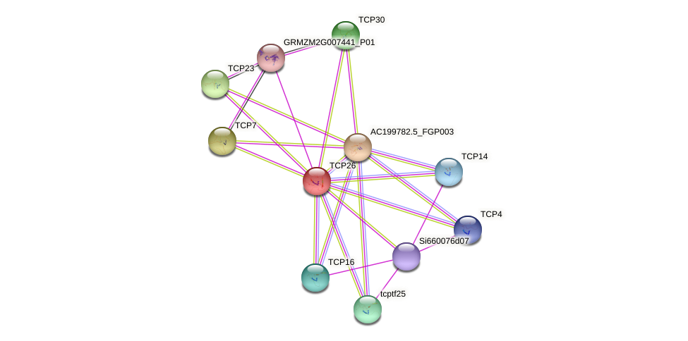 TCP26 protein (Zea mays) - STRING interaction network