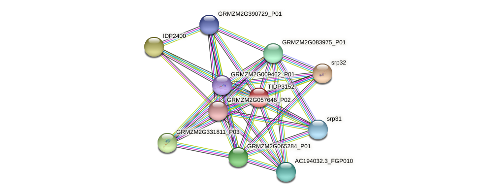 TIDP3152 protein (Zea mays) - STRING interaction network