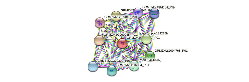 GRMZM2G077837_P01 protein (Zea mays) - STRING interaction network
