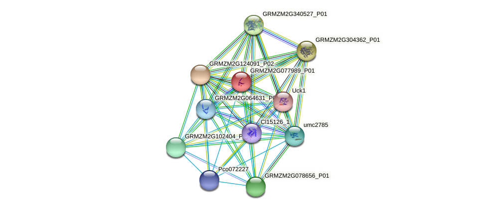 GRMZM2G077989_P01 protein (Zea mays) - STRING interaction network