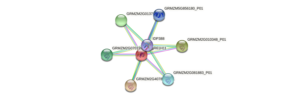 GRMZM2G078013_P01 protein (Zea mays) - STRING interaction network