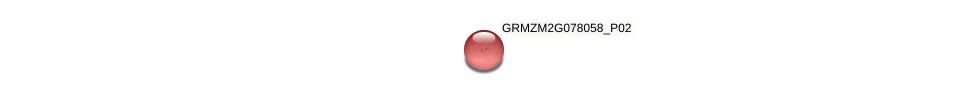 GRMZM2G078058_P02 protein (Zea mays) - STRING interaction network