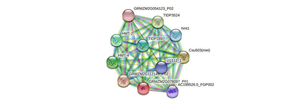 GRMZM2G078097_P01 protein (Zea mays) - STRING interaction network