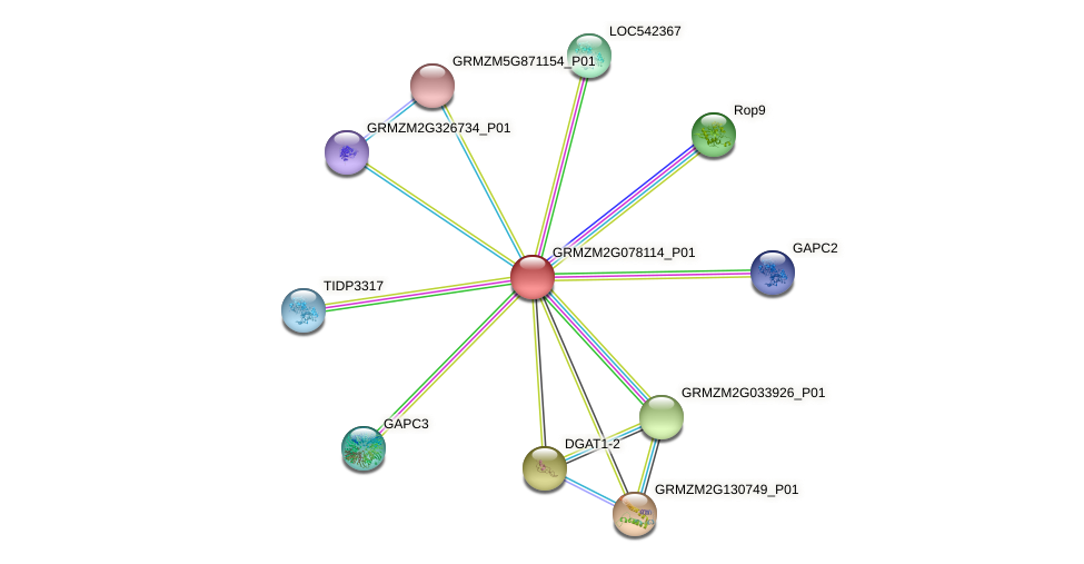 GRMZM2G078114_P01 protein (Zea mays) - STRING interaction network