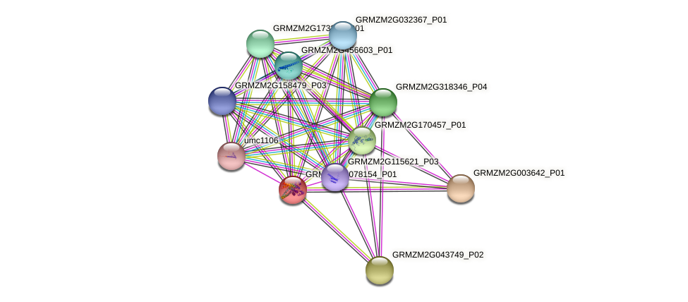 GRMZM2G078154_P01 protein (Zea mays) - STRING interaction network