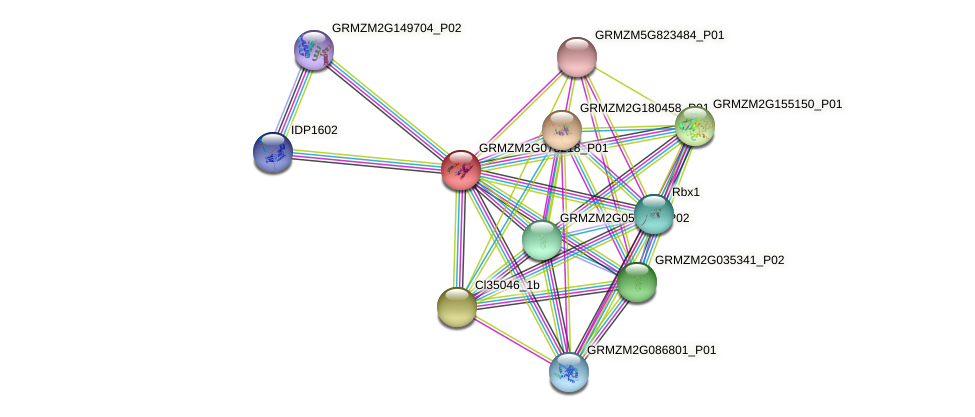 GRMZM2G078218_P01 protein (Zea mays) - STRING interaction network