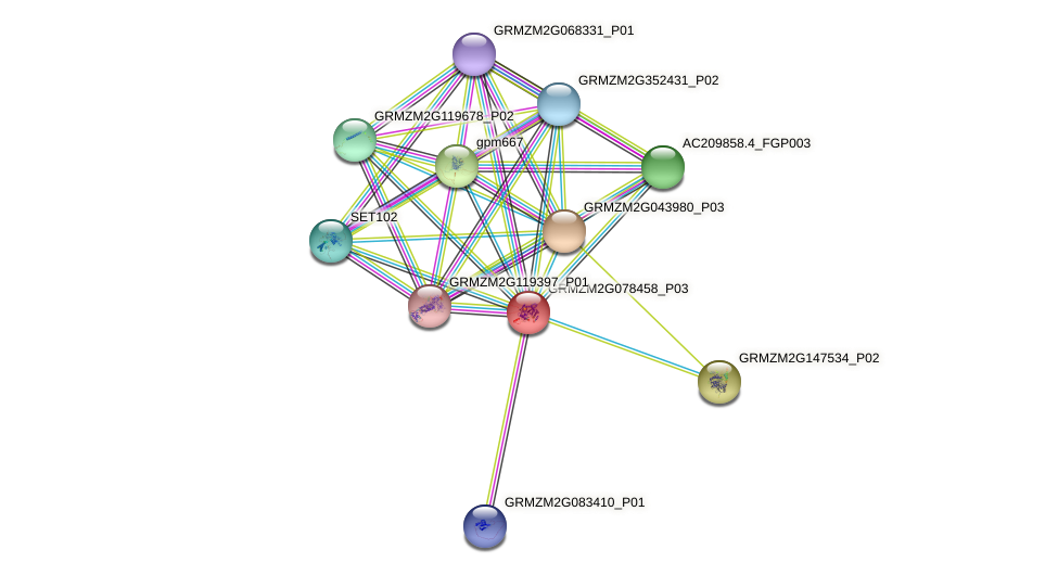 GRMZM2G078458_P03 protein (Zea mays) - STRING interaction network