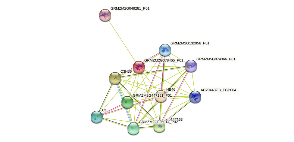 Zm.33121 protein (Zea mays) - STRING interaction network