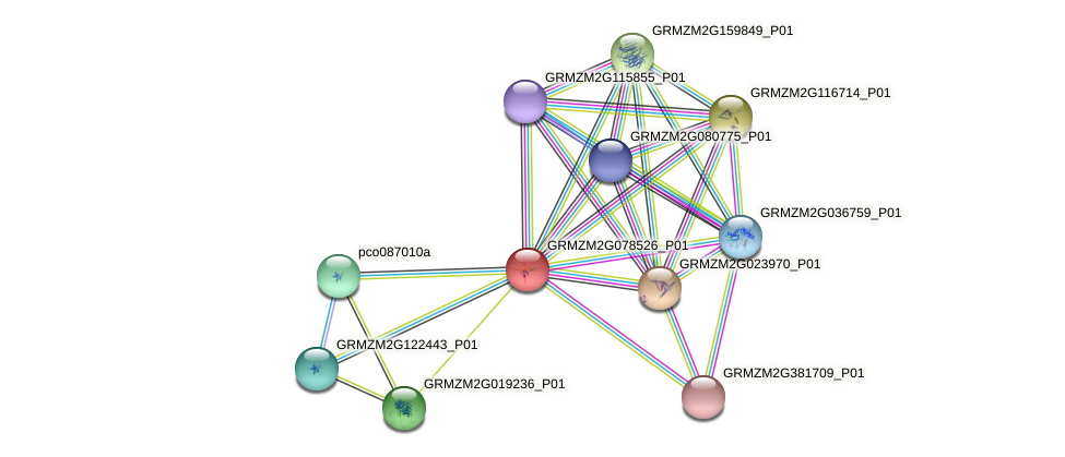 GRMZM2G078526_P01 protein (Zea mays) - STRING interaction network