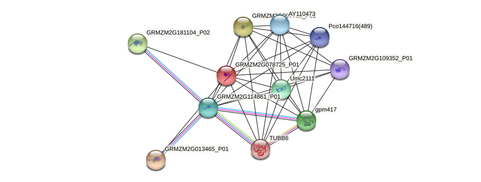 GRMZM2G078725_P01 protein (Zea mays) - STRING interaction network