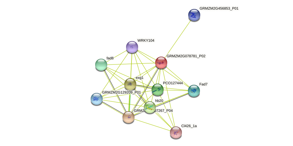 GRMZM2G078781_P02 protein (Zea mays) - STRING interaction network