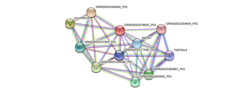 Zm.102147 protein (Zea mays) - STRING interaction network