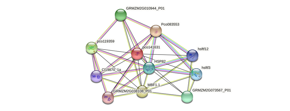pco141631 protein (Zea mays) - STRING interaction network