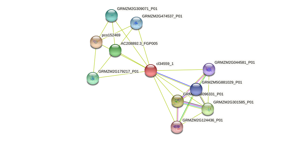 cl34559_1 protein (Zea mays) - STRING interaction network