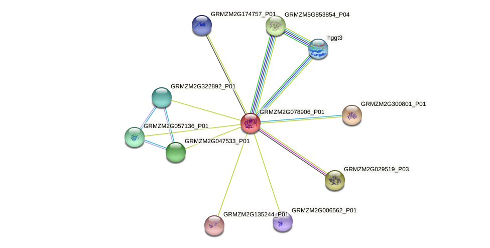 GRMZM2G078906_P01 protein (Zea mays) - STRING interaction network