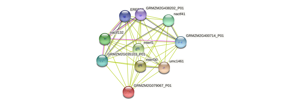 GRMZM2G079067_P01 protein (Zea mays) - STRING interaction network