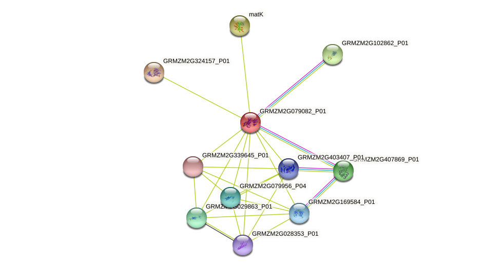 GRMZM2G079082_P01 protein (Zea mays) - STRING interaction network