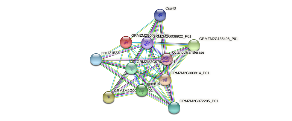 GRMZM2G079308_P01 protein (Zea mays) - STRING interaction network