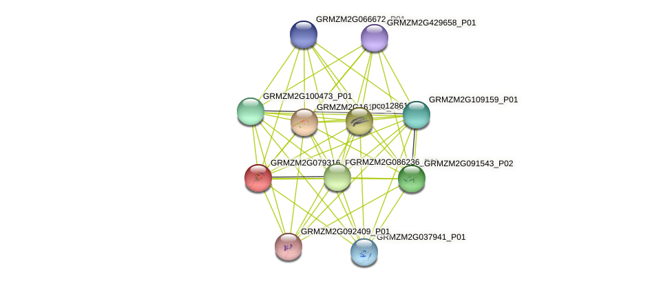 GRMZM2G079316_P01 protein (Zea mays) - STRING interaction network