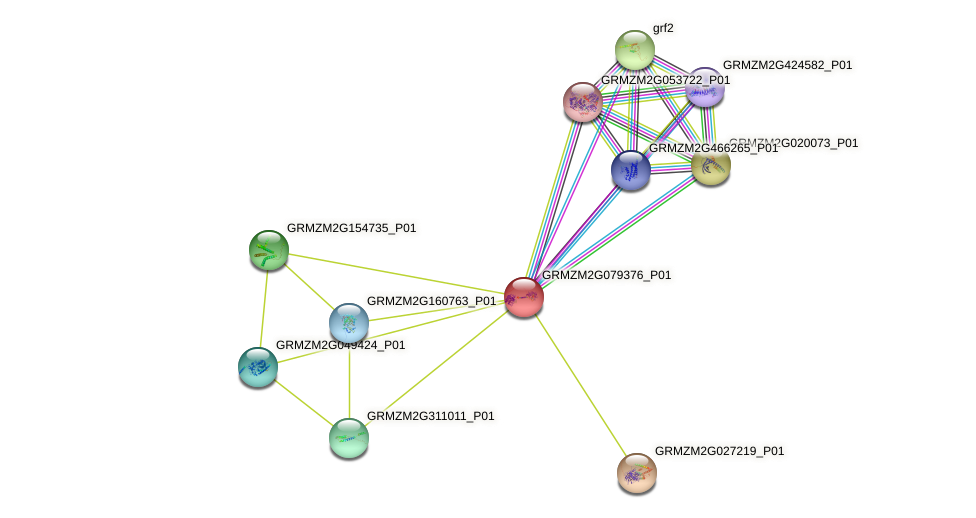 GRMZM2G079376_P01 protein (Zea mays) - STRING interaction network